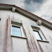 Vorsicht: Schimmelpilz und Algen an der Fassade